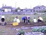 いも掘り中学部.jpg